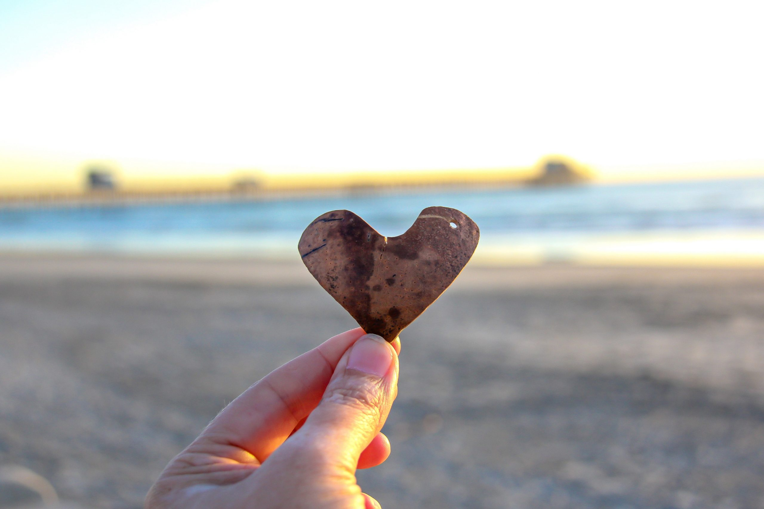 Ocean Beach Seashell